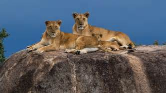 Serengeti could disappear under increasing pressures from