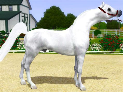 SER/SH Afternoon Delight - Silver Equus Ranch