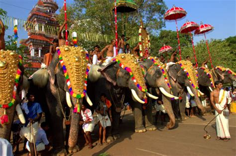 About 100 elephants paraded in Kerala's Thrissur Pooram