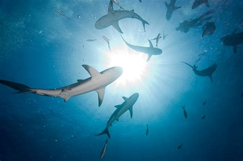 Pando: Southland swims with the sharks: Inside tales from
